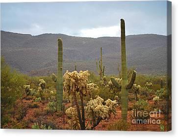 Canvas Print featuring the photograph Arizona's Sonoran Desert  by Donna Greene