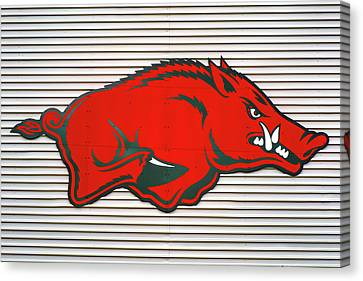 Arkansas Razorback On Metal Canvas Print by Gregory Ballos