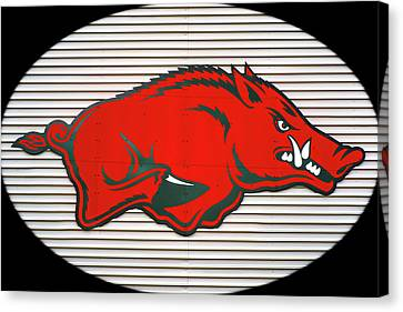 Arkansas Razorback On Metal With Black Border Canvas Print by Gregory Ballos