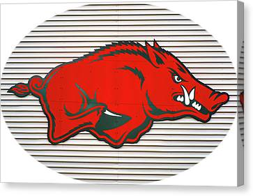 Arkansas Razorback On Metal With White Border Canvas Print by Gregory Ballos