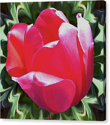 Arlington Tulip Canvas Print