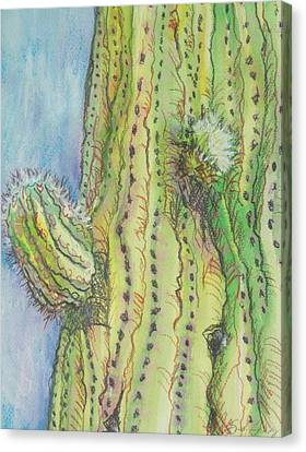 Arm Bud Canvas Print by Sandy Tracey