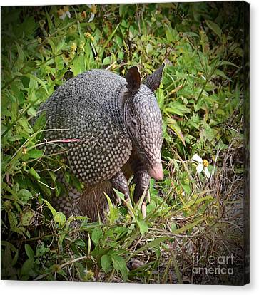 Armadillo And Flower Canvas Print