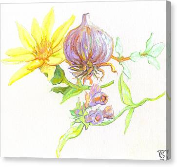 Arnica Garlic Thyme And Comfrey Canvas Print by Cameron Hampton PSA