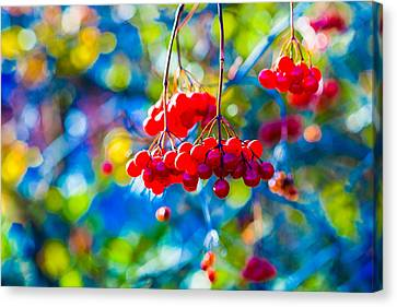 Canvas Print featuring the photograph Arrowwood Berries Abstract by Alexander Senin