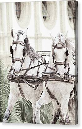 Art Ancient Potrait Of Wonderful Carriage White Horses In Moveme Canvas Print