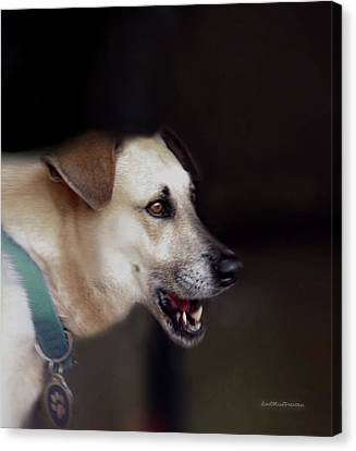 Buy Dog Art Canvas Print - Art By Cooper 8 by Miss Pet Sitter