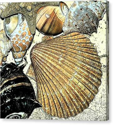 Art Shell 2 Canvas Print by Stephanie Troxell