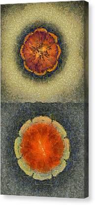 Arteriotrepsis Fantasy Flower  Id 16165-184422-09830 Canvas Print by S Lurk