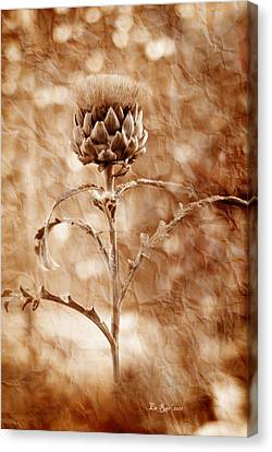 Artichoke Bloom Canvas Print by La Rae  Roberts