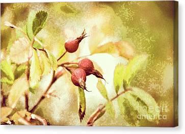 Artistic Rose Hips Canvas Print by Wendy Elliott