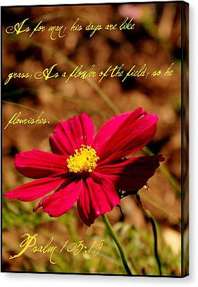 As A Flower Of The Fields Canvas Print by Elizabeth Babler