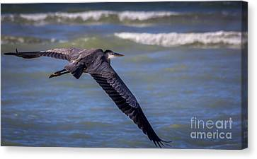 Great Blue Heron Canvas Print - As Easy As This by Marvin Spates