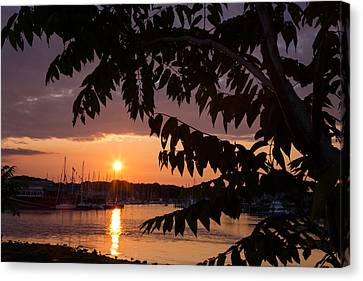 As It Sets Over The Harbor Canvas Print by Karol Livote
