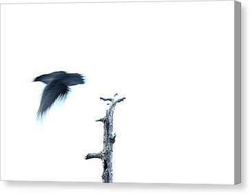 As The Crow Flies Canvas Print