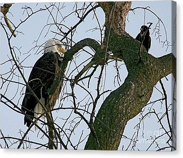 As The Eagle Looks On Canvas Print by Sue Stefanowicz