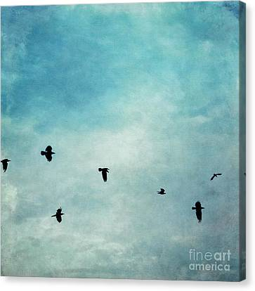 As The Ravens Fly Canvas Print by Priska Wettstein