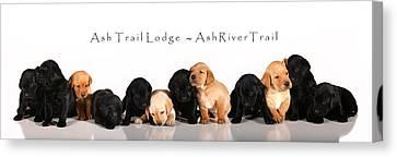 Ash Trail Lodge Pups Canvas Print by Pam Gabriel