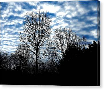 Ash Trees Against A Mackerel Sky Canvas Print
