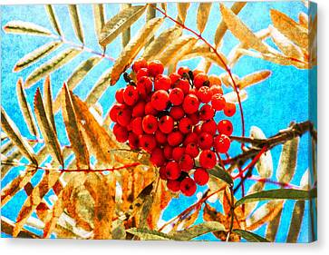Ashberry Canvas Print by Alexander Senin