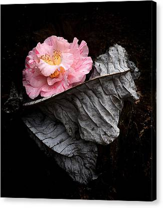 Ashes Camelia Canvas Print by Kathryn Stivers