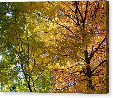 Canvas Print featuring the photograph Ashland Autumn by John Norman Stewart