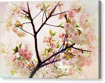 Asian Cherry Blossoms Canvas Print