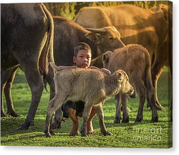 Canvas Print featuring the photograph Asian Children And Buffalo At Countryside. by Tosporn Preede