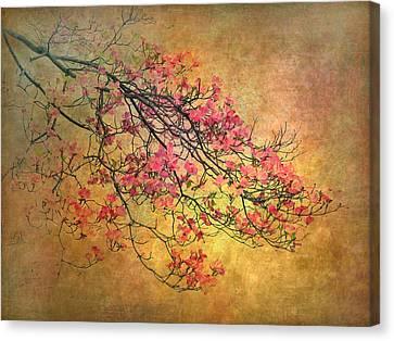 Asian Dogwood Canvas Print by Jessica Jenney