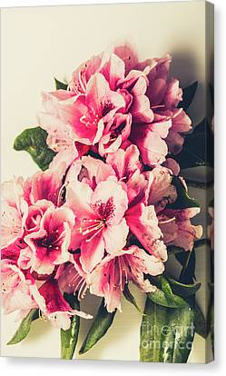Asian Floral Rhododendron Flowers Canvas Print