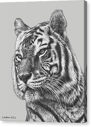 Asian Tiger 2 Canvas Print