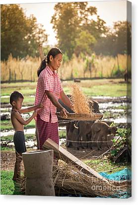 Canvas Print featuring the photograph Asian Women Winnow Rice Rice Separate Between Rice And Rice Chaf by Tosporn Preede