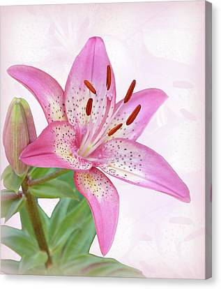 Asiatic Lily Trogon Canvas Print