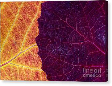 Fiery Red Canvas Print - Aspen Abstract by Tim Gainey