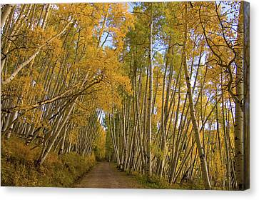 Canvas Print featuring the photograph Aspen Alley by Steve Stuller
