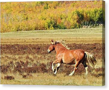 Aspen And Horsepower Canvas Print