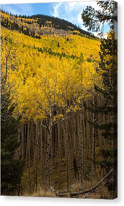 Aspen Audience Canvas Print by Bill Cantey