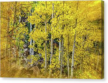 Aspen Autumn Burst Canvas Print by Bill Gallagher
