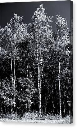 Aspen Drama Canvas Print
