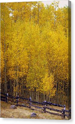 Aspen Fall 2 Canvas Print