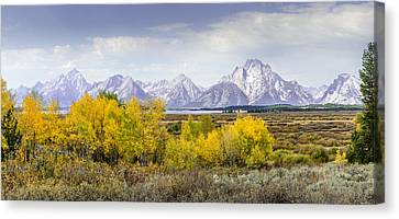 Aspen Gold In The Tetons Canvas Print