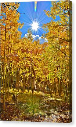 Canvas Print featuring the photograph Aspen Grove Aglow by Diane Alexander