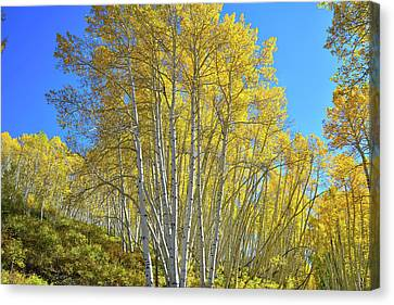 Canvas Print featuring the photograph Aspen Lane by Ray Mathis