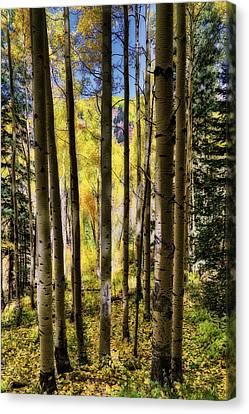 Canvas Print featuring the photograph Aspen Mood - Autumn - Colorful Colorado by Jason Politte