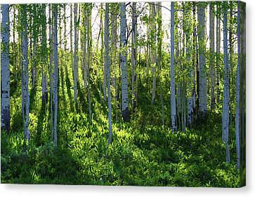 Canvas Print featuring the photograph Aspen Morning 1 by Marie Leslie