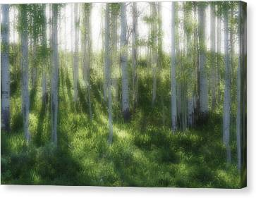Canvas Print featuring the photograph Aspen Morning 2 by Marie Leslie