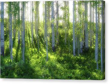 Canvas Print featuring the photograph Aspen Morning 3 by Marie Leslie