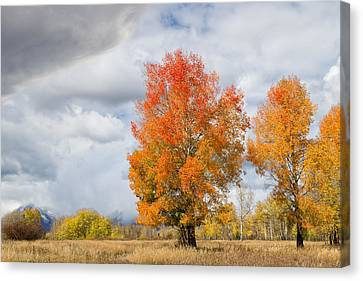 Earth Tones Canvas Print - Aspen Orange by Kathleen Bishop