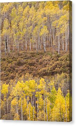Canvas Print featuring the photograph Aspen Patterns by Patricia Davidson