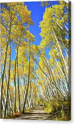 Canvas Print featuring the photograph Aspen Road by Ray Mathis